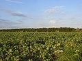 Farmland, Stanmore - geograph.org.uk - 1585704.jpg
