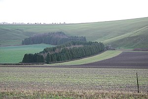 Swallowcliffe - Image: Farmland by Swallowcliffe geograph.org.uk 353444