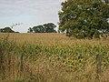 Farmland north of Rack Lane - geograph.org.uk - 588346.jpg