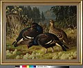 Ferdinand von Wright - Black Grouse, Two Cocks and a Hen - A-2002-621 - Finnish National Gallery.jpg