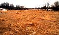 Field (1907908099).jpg