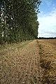 Field boundary near Risby - geograph.org.uk - 1428815.jpg