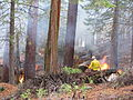 Fire Yosemite (3021735300).jpg