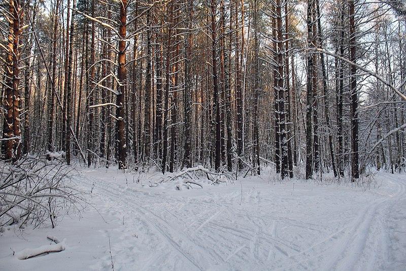 File:First fork of the ski run - panoramio.jpg