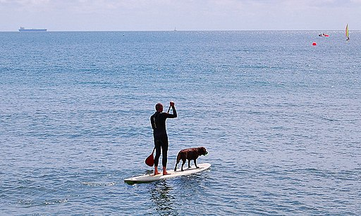 Flickr - ronsaunders47 - ONE MAN AND HIS DOG PLUS SURFBOARD