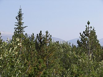 Flora on Klondike Highway, British Columbia 3.jpg