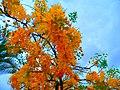 Flores amarelas de outono - panoramio.jpg