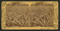 Florida, a pine-apple plantation, by Barker, George, 1844-1894.png
