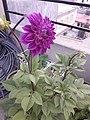 Flower20180527 184514.jpg