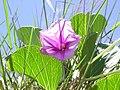 Flower - panoramio (42).jpg
