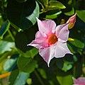 Flower 2715.jpg