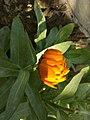 Flower 31 HDR.jpg