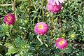 Flower 78 (8067096792).jpg