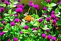 Flower at butterfly.jpg
