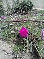 Flower image 3.jpg