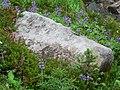 Flowers (cc4081ede6b2451d9ce2116b397dd503).JPG