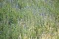 Flowers at Yala.jpg