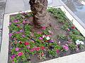 Flowers during winter in kuwiat by irvin calicut (1).jpg