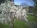 Flowery Broad Street.jpg