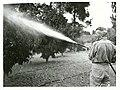 Fog Spraying fruit trees, Upper Moutere.jpg