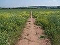 Footpath On Whittington Heath - geograph.org.uk - 456823.jpg