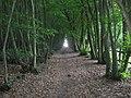 Footpath in Beech Wood (2) - geograph.org.uk - 1437902.jpg