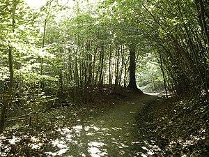 Risskov - Image: Footpath in Riisskov