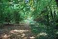Footpath through the woods - geograph.org.uk - 984219.jpg