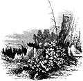 Forest Hymn pg 49b.jpg