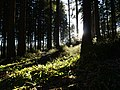 Forest at Wurmberg 10.jpg