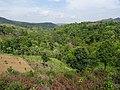 Forest in Mandalay Region.jpg
