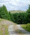 Forestry road near Bronbyrfe, Ceredigion - geograph.org.uk - 1435302.jpg