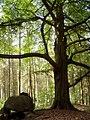 Forst Cammin - geo.hlipp.de - 11530.jpg