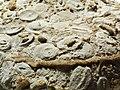 Fossils (8742869375).jpg