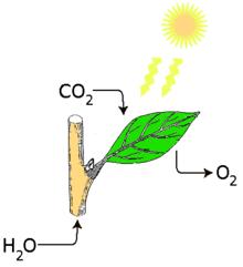 Fotosynteza3.png