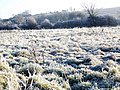 Frosted meadow, Bishopstone - geograph.org.uk - 1104516.jpg