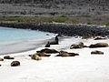 Galapagossealion.jpg