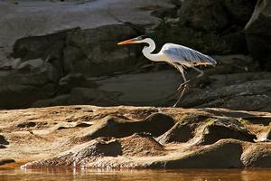 Araguaia National Park - Image: Garça no Rio Araguaia