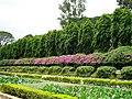 Garden,bangaiuru,karnataka - panoramio.jpg