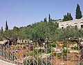 Garden of Gethsemane wide view from southwest corner.jpg