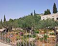 Garden of Gethsemane wide view from southwest corner.jpg