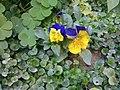 Gardens in Baghdad 13.jpg