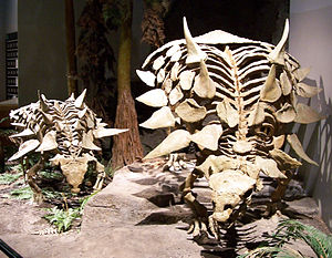 Polacanthinae - Skeletons of Gastonia burgei, North American Museum of Ancient Life