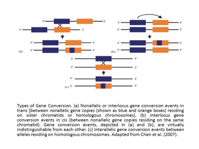 Why Are Mutations And Conjugation Important For Natural Selection