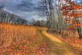 Gfp-wisconsin-wildcat-mountain-state-park-hiking-trail-at-wildcat-mountain.jpg