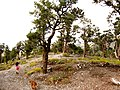 Girl, Dog and Trees - panoramio.jpg