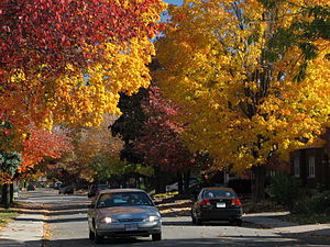 The Glebe - A typical Glebe street in autumn