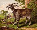 Goat Family (1).jpg