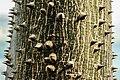 Gradina Botanica (8553141624).jpg