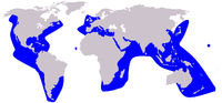 Grampus griseus distribution.png